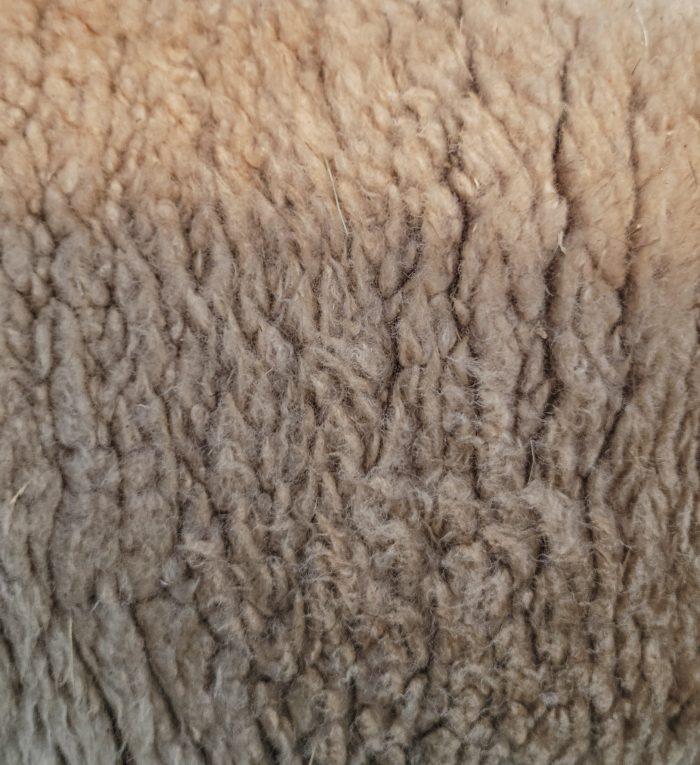 Babydoll fleece